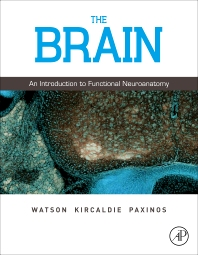 Cover image for The Brain