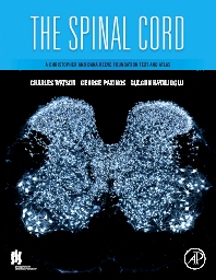 Cover image for The Spinal Cord