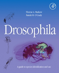 Cover image for Drosophila