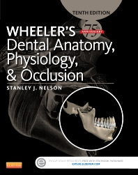 Cover image for Wheeler's Dental Anatomy, Physiology and Occlusion