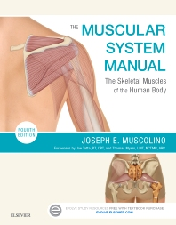 Cover image for The Muscular System Manual