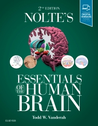 Cover image for Nolte's Essentials of the Human Brain