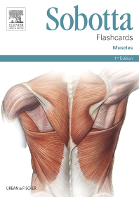 Cover image for Sobotta Flashcards Muscles