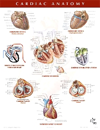 Cardiac Anatomy Chart - 1st Edition - ISBN: 9781929007264
