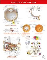 Anatomy of the Eye Chart