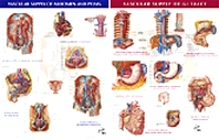 Vascular Supply of Abdomen & Pelvis & Vascular Supply of GI Tract - 2 Chart Set