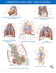 Cardiopulmonary Circulation Chart