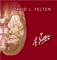 Cover image for Netter. Flashcards de neurociencia