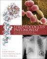 Streptococcus Pneumoniae, 1st Edition,Jeremy Brown,Sven Hammerschmidt,Carlos Orihuela,ISBN9780124105300