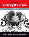 Atlas of the Developing Mouse Brain at E17.5, P0 and P6, 1st Edition,George Paxinos,Glenda Halliday,Charles Watson,Yuri Koutcherov,Hongquin Wang,ISBN9780125476225